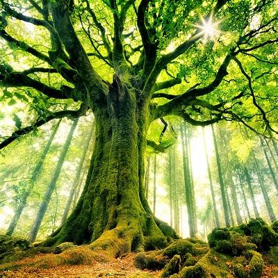 zon schijnt door de boom